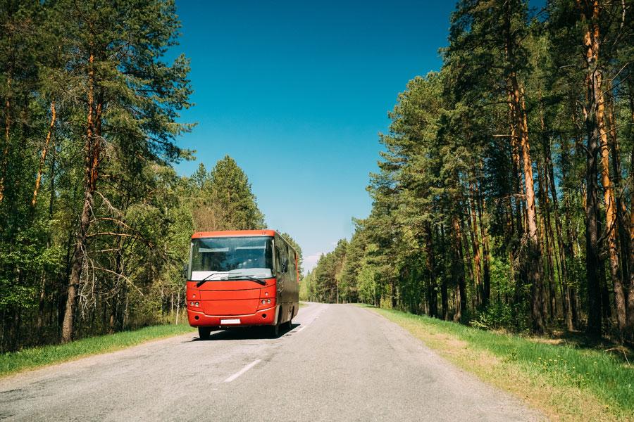Hai bisogno di un autobus per gite scolastiche a Roma? Ecco a chi rivolgerti!